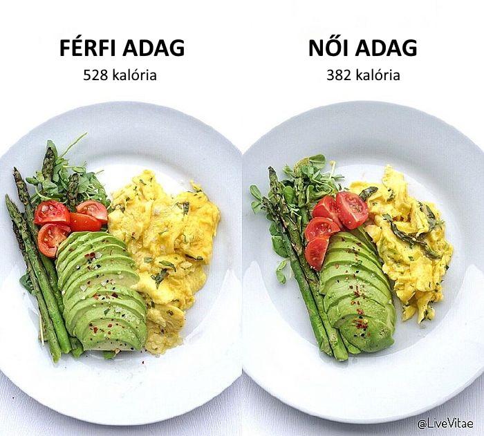 mi a diéta történelem)